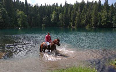 Ilija, ein merkwürdiger Pferdeflüsterer und Naturfreund, der heimgekehrt ist